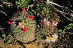 S1745 2010-03-16 Mam goodridgei 2