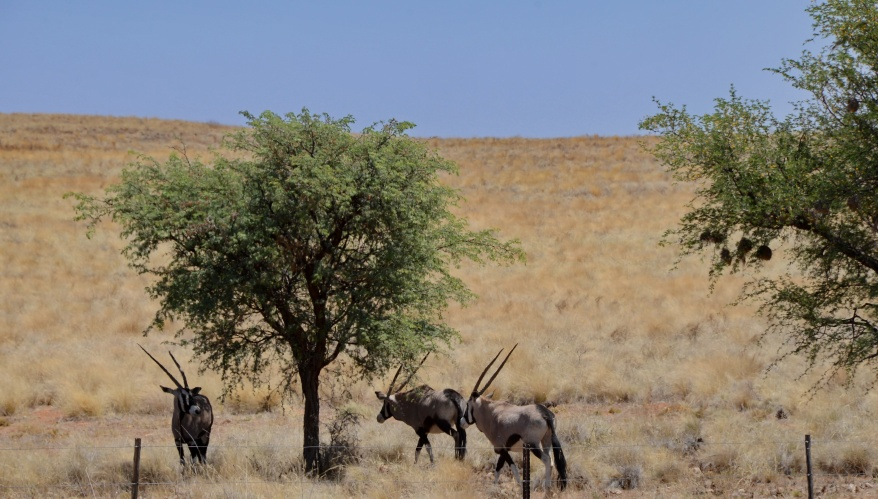 S2613 - Oryx