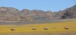 S2689 – Oryx at Goegap NatureReserve