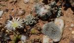 S2717 – lichen
