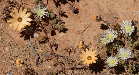 S2718 - flowers