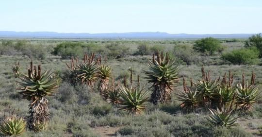 S2758 - Aloe ferox