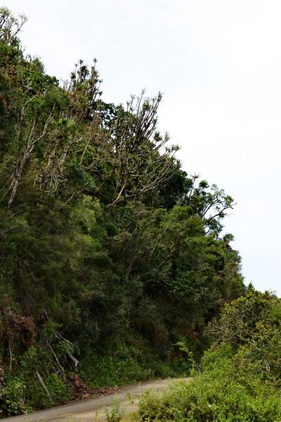 S2776 - tree Euphorbia sp.