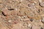 S2802 – Gibbaeum nuciforme (G.cryptopodium)