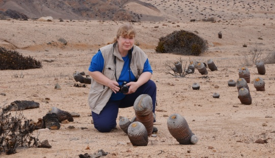 Pan de Azucar: Copiapoa cinerea ssp. columna-alba: Angie with an old friend - 'Smiler'.