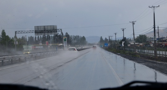 Ruta 5 in pouring rain - never seen north of Santiago, perhaps much more common to the south (S2862)