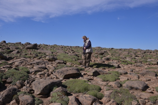 Angie in the field - with Llareta - Azorella compacta? Unlikely, at 1,400 m altitude (too low)