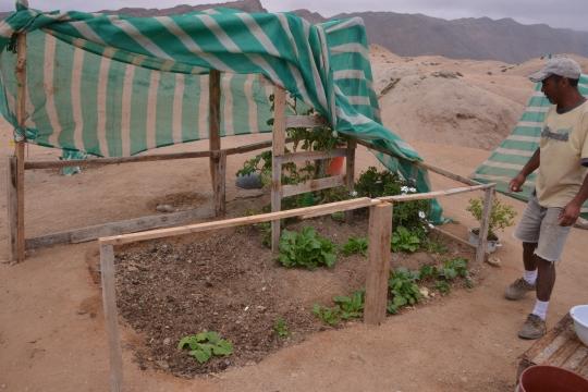 S2916 -  'Allotment gardening', Esmeralda style'