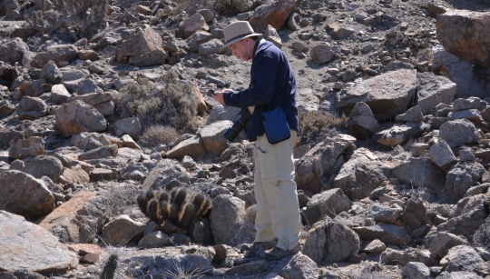 S2935 Jonathan keys out details for Copiapoa marginata