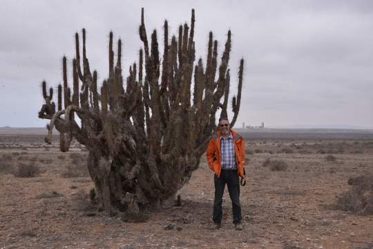 S2901 - Massive Eulychnia acida + me for scale. I wonder what the construction is in the back ground?