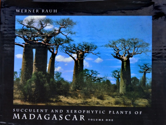 the giant pachycaul trees, Adansonia grandieri, standing guard along the Avenue of the Baobabs.