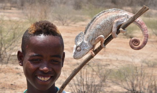 Chameleon on a stick