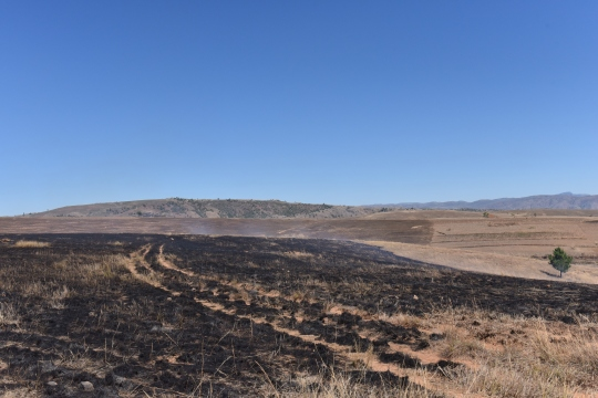 Burned fields